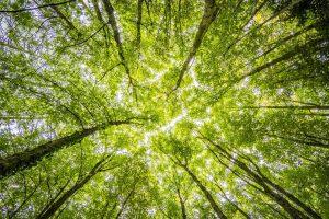 Read more about the article Les avantages d'investir dans un Groupement Forestier d'Investissement